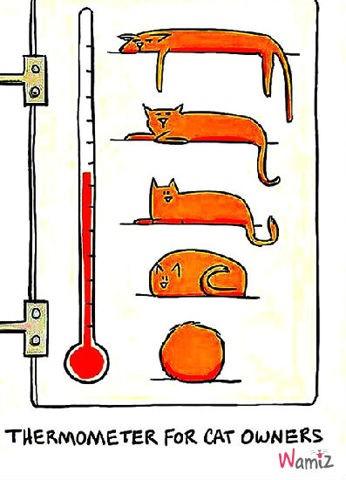 Pour ceux qui ont un chat, lolcats réalisé sur Wamiz