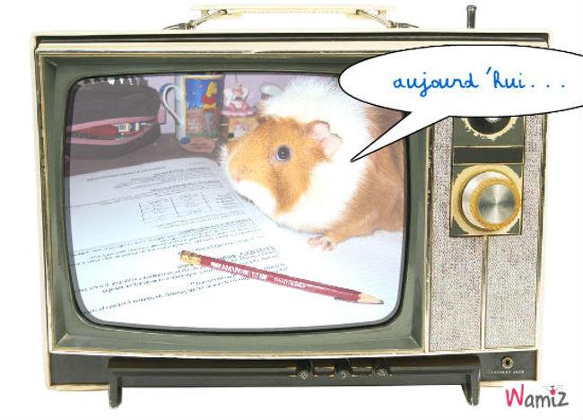 présentateur télé, lolcats réalisé sur Wamiz
