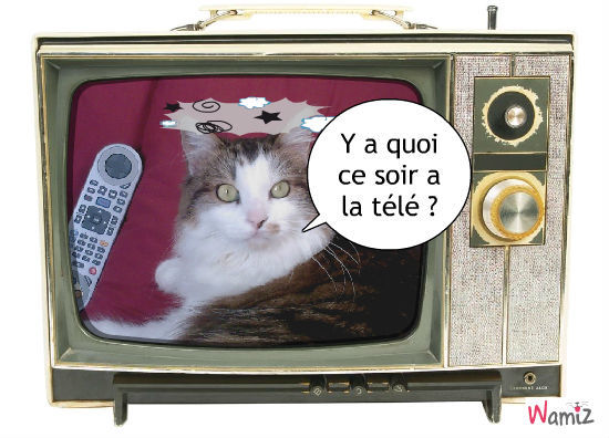 programme télé, lolcats réalisé sur Wamiz