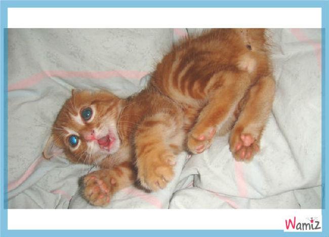 ptit chaton, lolcats réalisé sur Wamiz