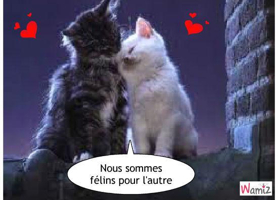 Quand deux chats sont amoureux, lolcats réalisé sur Wamiz