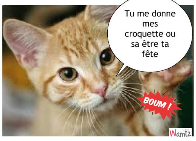 Quand le chat à faim tu lui donne ou sa tourne mal..., lolcats réalisé sur Wamiz