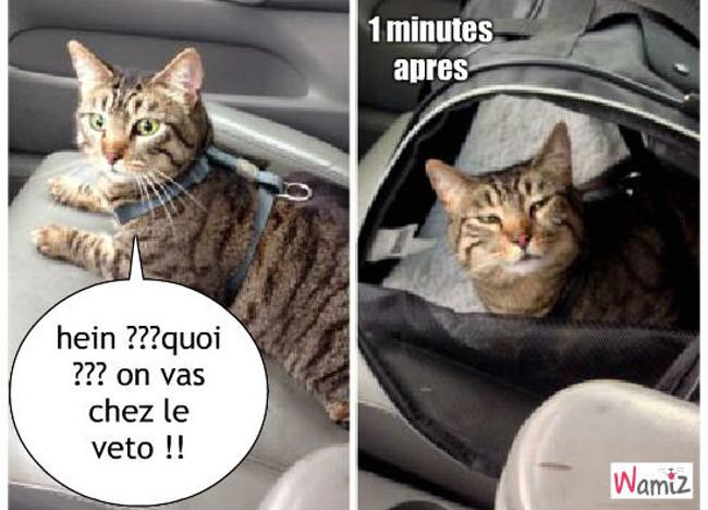 quand ton chat realise qu il vas hein ??? , lolcats réalisé sur Wamiz