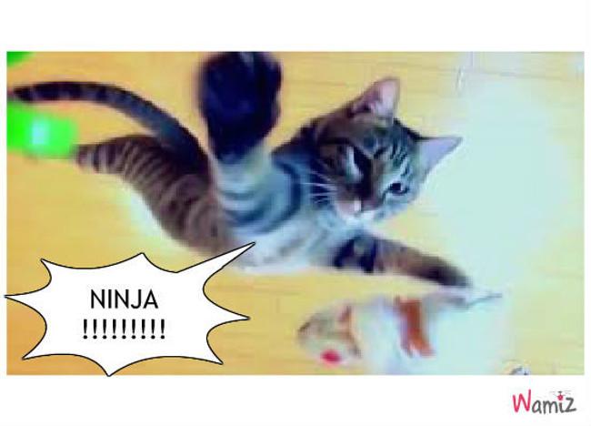 Quand ton chat veut devenir ninja ..., lolcats réalisé sur Wamiz