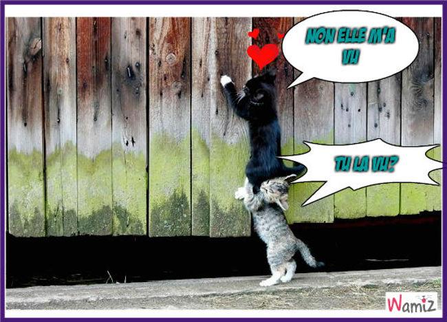 quand un chat est amouraux |BOUH|, lolcats réalisé sur Wamiz