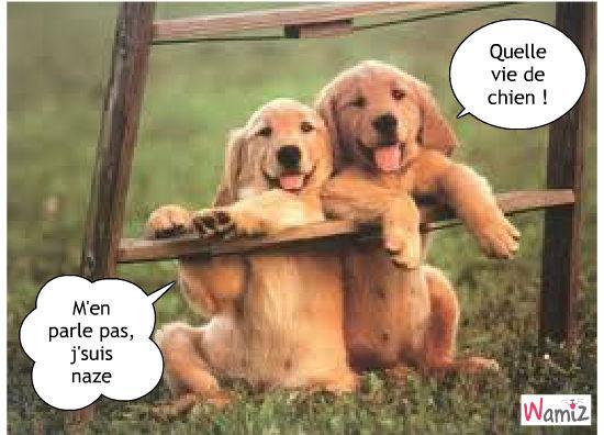 """Résultat de recherche d'images pour """"chien fatigué humour"""""""