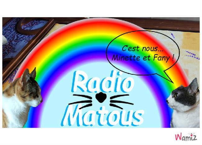 Radio Matous !, lolcats réalisé sur Wamiz