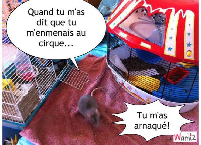 rat, lolcats réalisé sur Wamiz