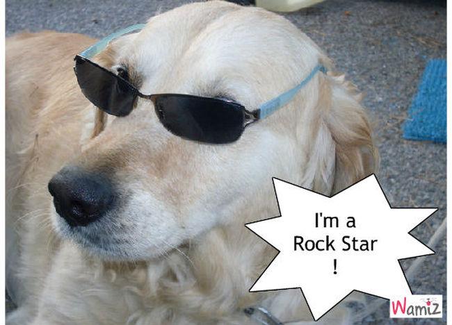 Rock Star !, lolcats réalisé sur Wamiz