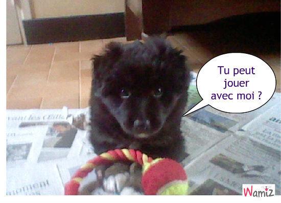 Ruby, mon chien (bébé)., lolcats réalisé sur Wamiz