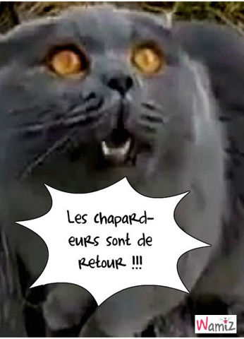S.O.S Chatpardeurs !, lolcats réalisé sur Wamiz