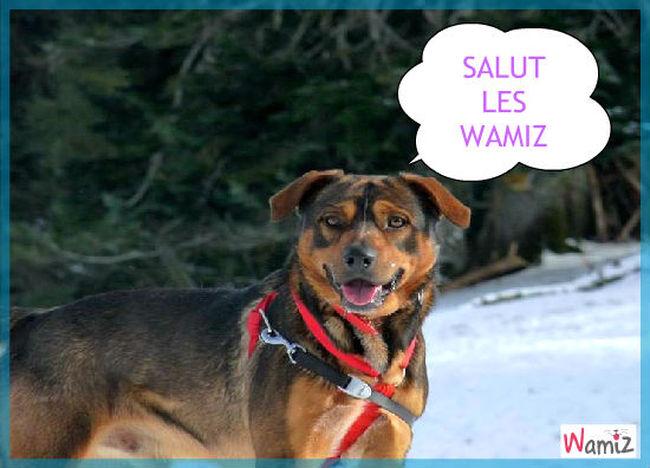 salut, lolcats réalisé sur Wamiz