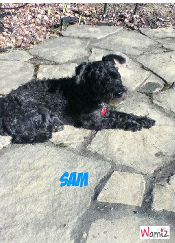 sam se reposant au soleil, lolcats réalisé sur Wamiz