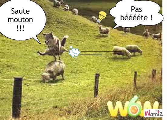 Saute mouton, lolcats réalisé sur Wamiz