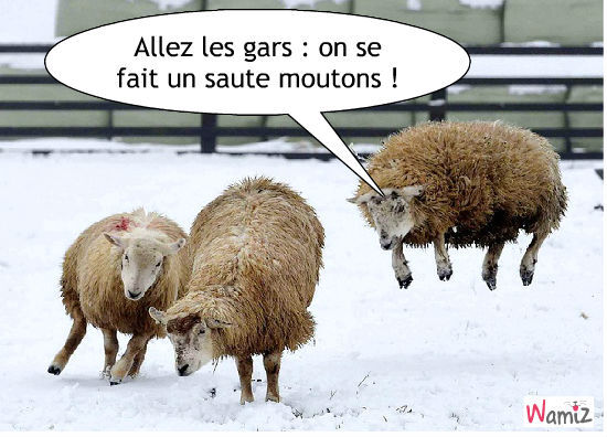 saute moutons, lolcats réalisé sur Wamiz