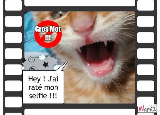 Selfie, lolcats réalisé sur Wamiz
