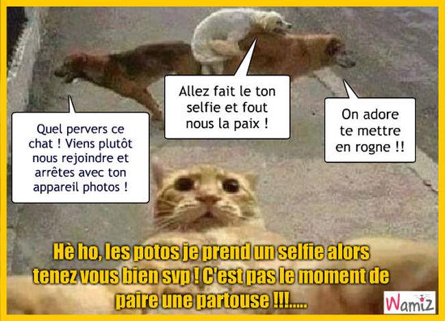 Selfie cochon, lolcats réalisé sur Wamiz