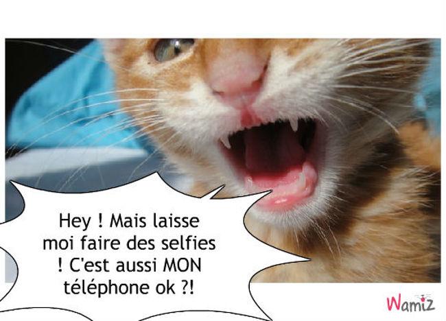 Selfies Cat !, lolcats réalisé sur Wamiz