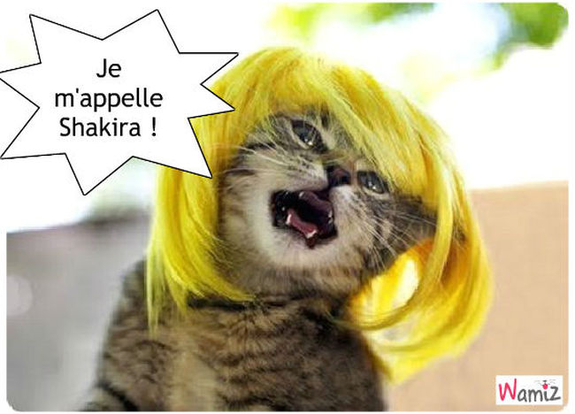 Shakira !, lolcats réalisé sur Wamiz