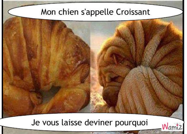 Shar Pei VS Croissant, lolcats réalisé sur Wamiz