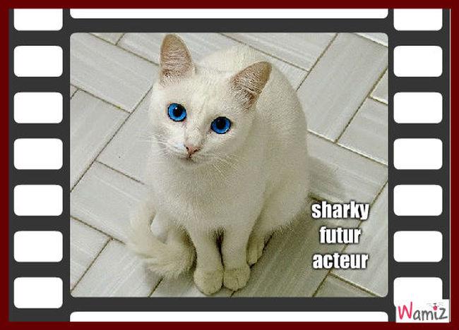 sharky, lolcats réalisé sur Wamiz