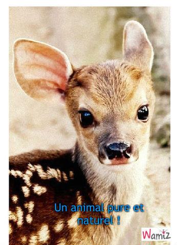 Simple :Animal 1, lolcats réalisé sur Wamiz