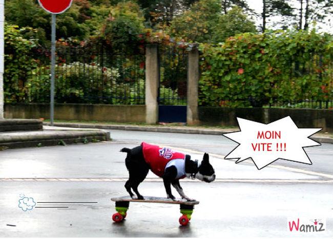 skate !, lolcats réalisé sur Wamiz