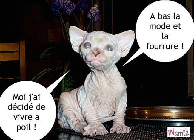 Sphinx : chat nu, lolcats réalisé sur Wamiz