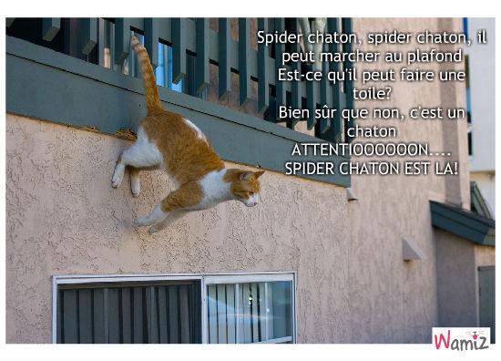 Spider chaton, lolcats réalisé sur Wamiz