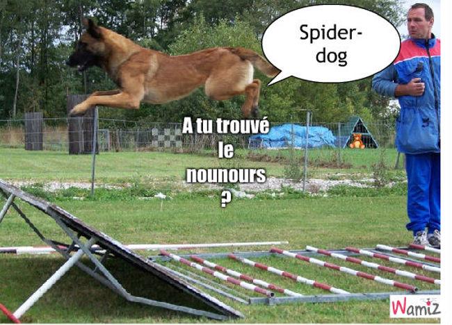 Spider-Dog, lolcats réalisé sur Wamiz