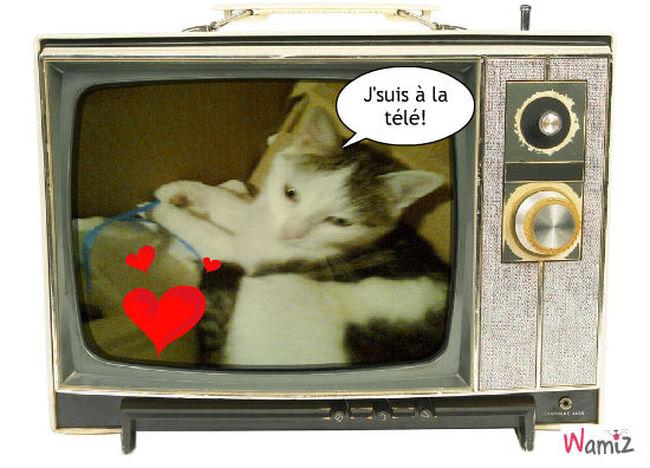 Star TV, lolcats réalisé sur Wamiz