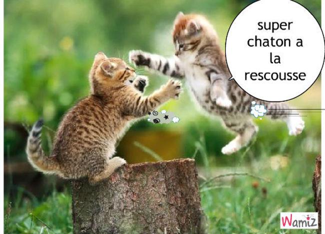 super chaton, lolcats réalisé sur Wamiz
