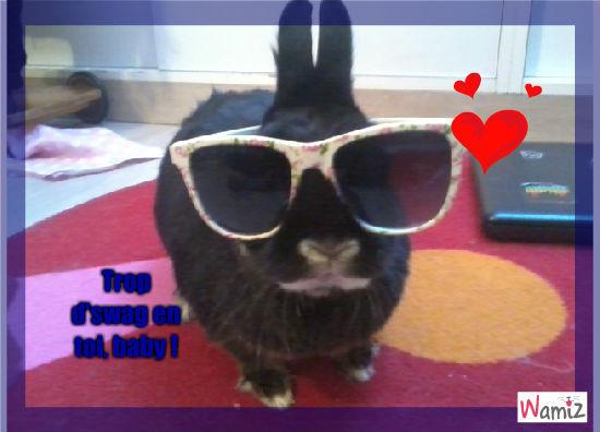 Swag rabbit, lolcats réalisé sur Wamiz
