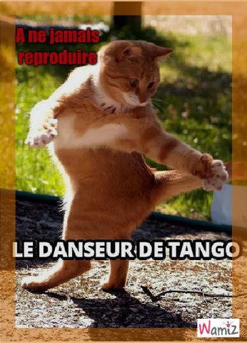 tango, lolcats réalisé sur Wamiz
