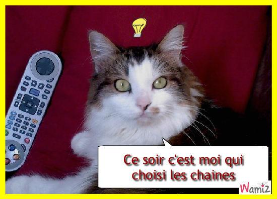télé chat, lolcats réalisé sur Wamiz