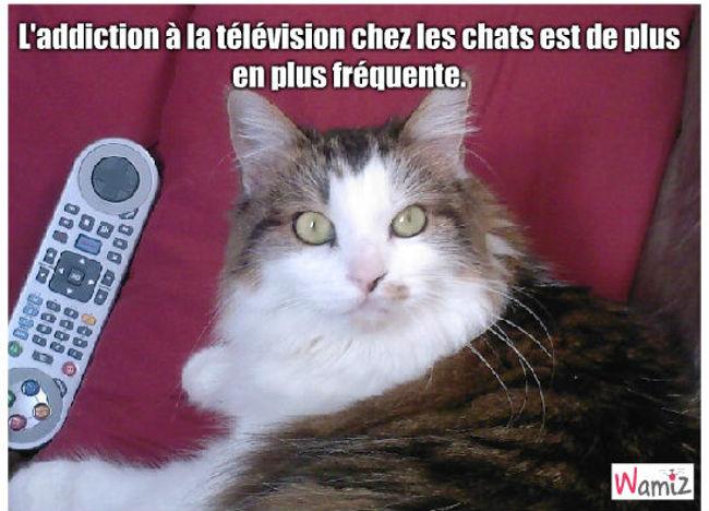 Télévision, lolcats réalisé sur Wamiz