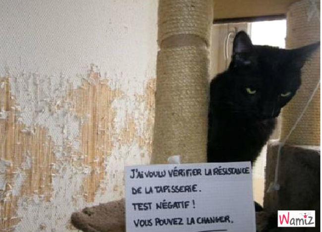 test de chat., lolcats réalisé sur Wamiz