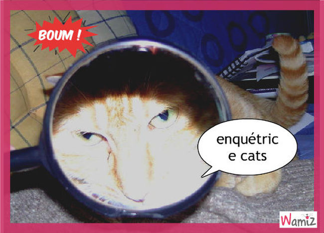 the cats, lolcats réalisé sur Wamiz