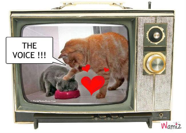 The Voice !!, lolcats réalisé sur Wamiz