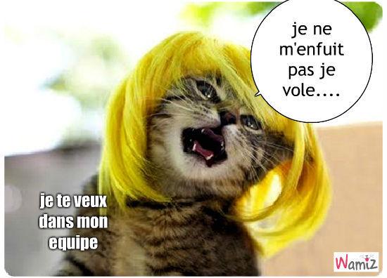 the voicecats, lolcats réalisé sur Wamiz