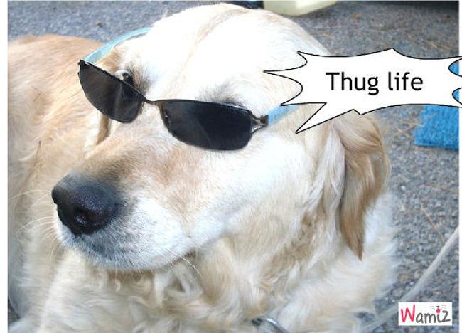 Thug, lolcats réalisé sur Wamiz
