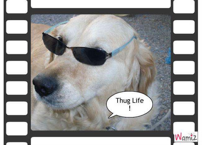 Thug Life, lolcats réalisé sur Wamiz