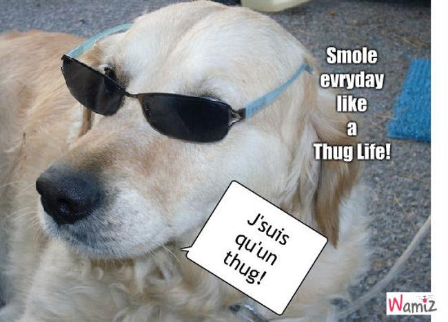 Thug life !, lolcats réalisé sur Wamiz
