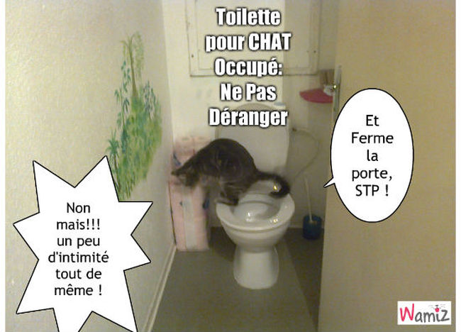 Toilette pour chat, lolcats réalisé sur Wamiz