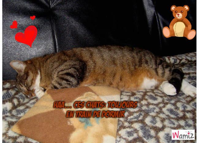 Toujours en train de dormir!!, lolcats réalisé sur Wamiz