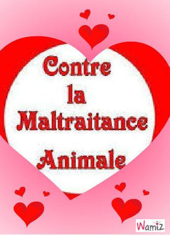Tous contre la maltraitance des animaux !, lolcats réalisé sur Wamiz