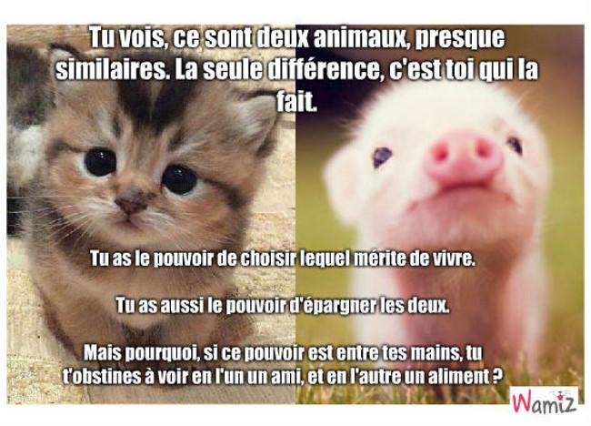 Tous les animaux méritent de vivre, lolcats réalisé sur Wamiz
