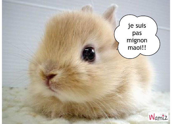animaux trop chou Quotes