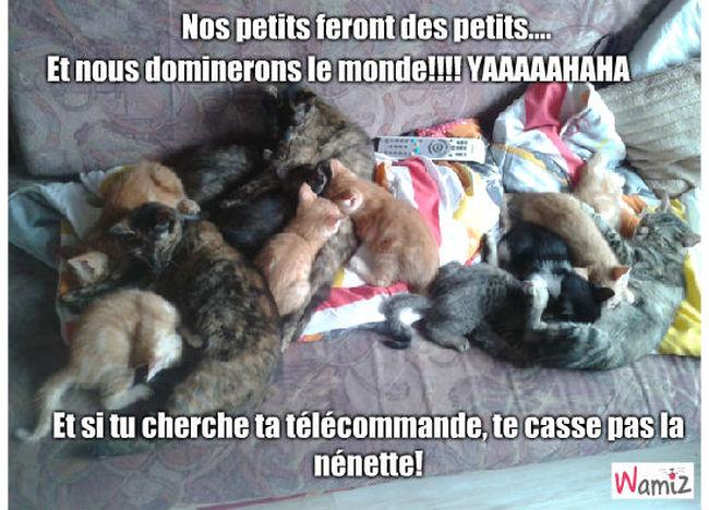 trop de chatons, lolcats réalisé sur Wamiz