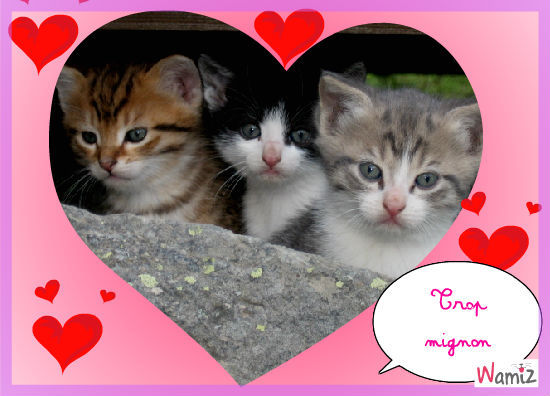 08 08 la journ e du chat page 100 le forum sfr 445700 - Images de chats trop mignons ...